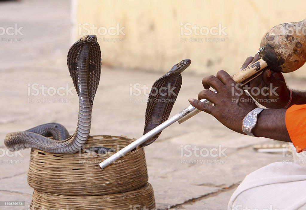 Snake charmer in Jaipur, India royalty-free stock photo