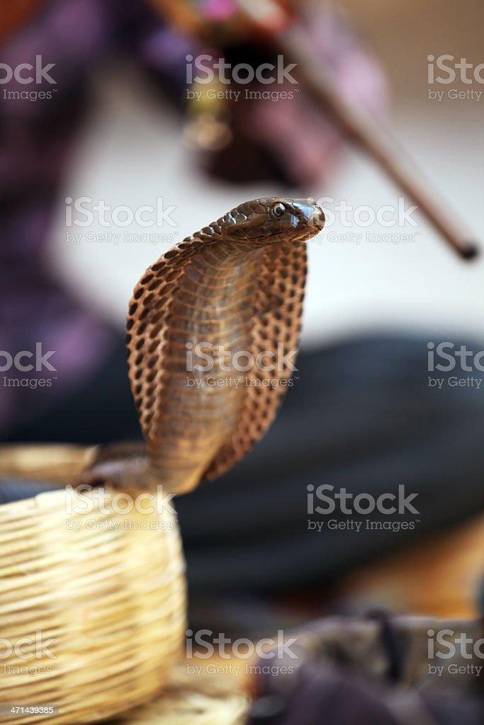 Snake charmer, India royalty-free stock photo