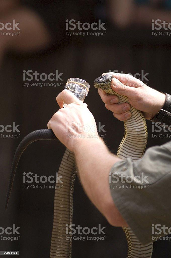 Snake Charmer royalty-free stock photo