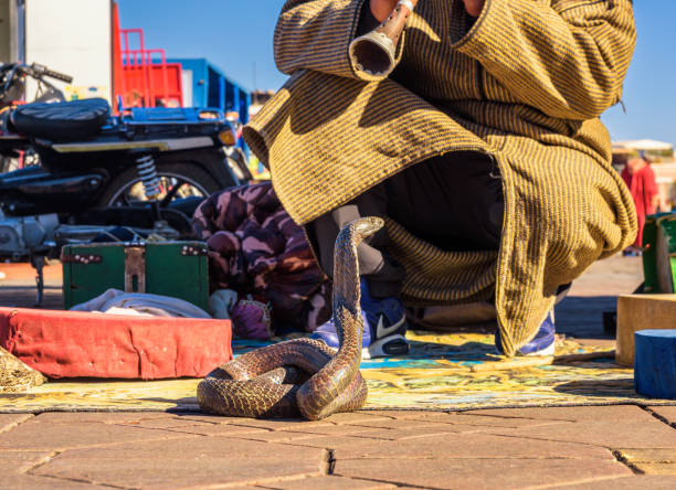 snake charmer plays music for his cobra at the jemaa el-fnaa square in marrakesh - charming stock photos and pictures