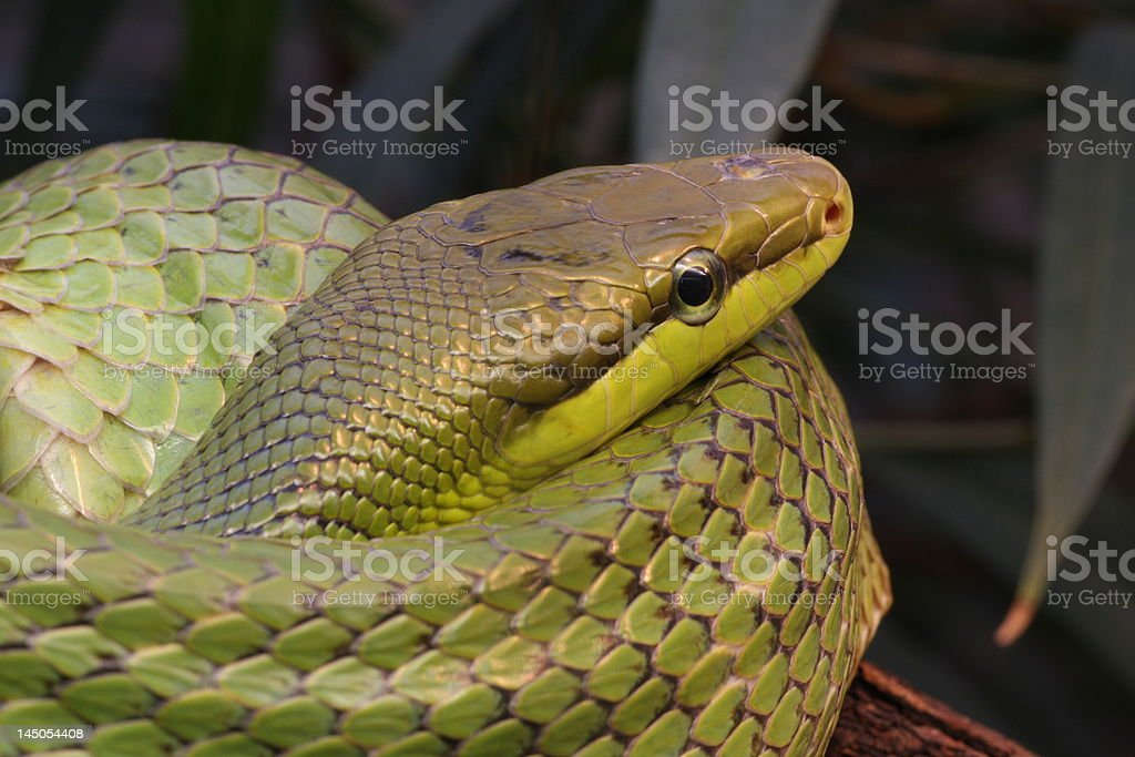 Snake green stock photo