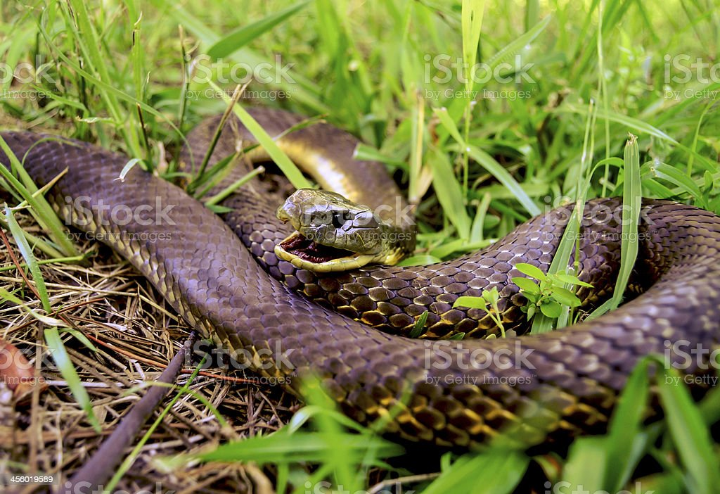 Snake in grass stock photo