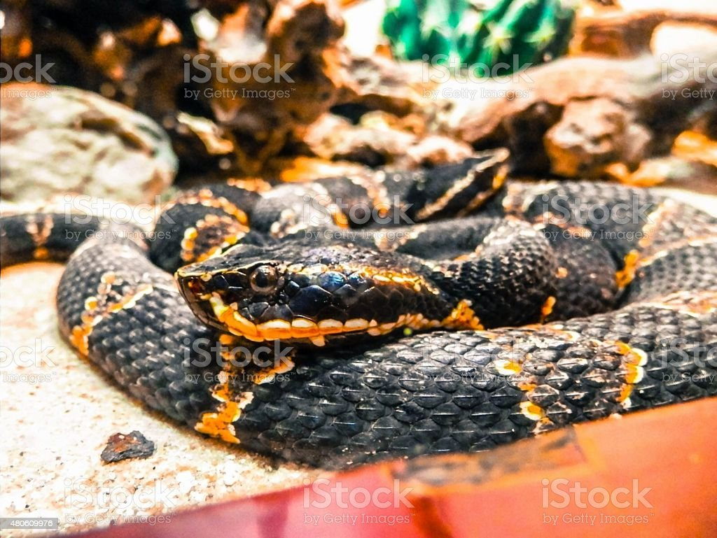 Snake in the Bronx Zoo stock photo
