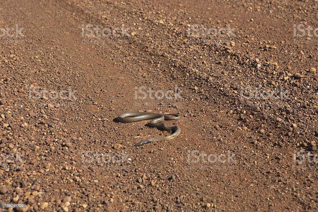 Snake in the outback royalty-free stock photo