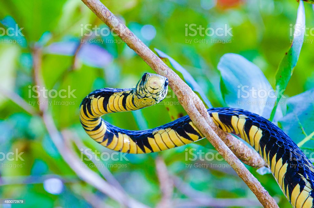 Snake in the tree stock photo