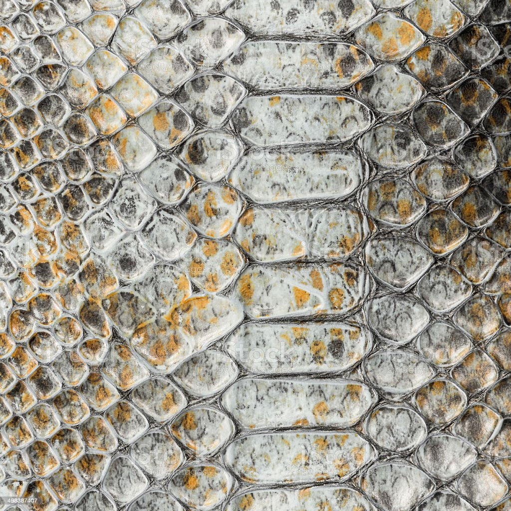 Snake leather stock photo