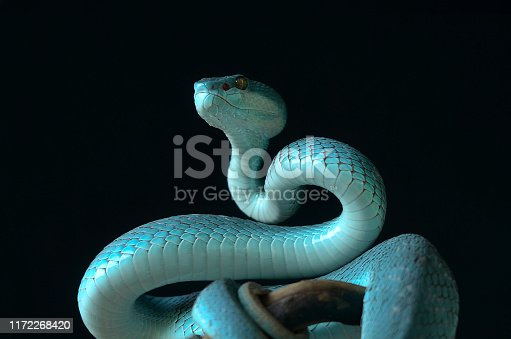 snake on black background