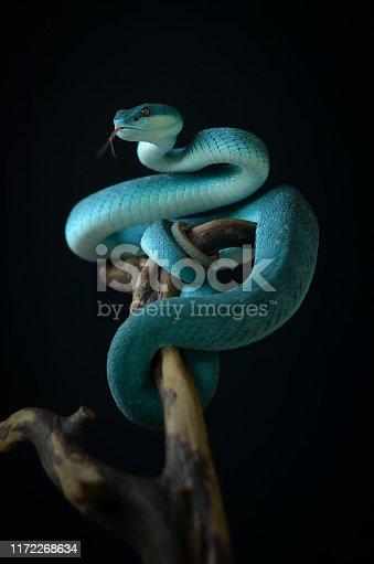 snake on black background