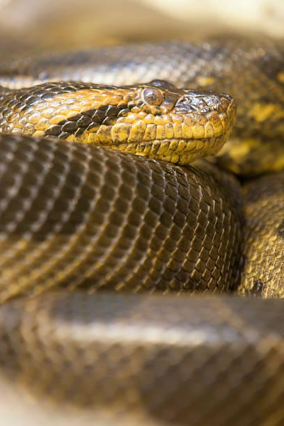 Serpent - Photo