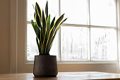 istock Snake plant next to a window, in a beautifully designed interior. 1192663807