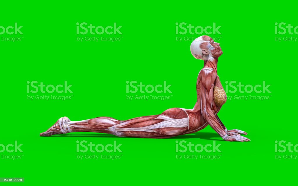 Snake Pose Female Anatomy Stock Photo & More Pictures of Activity ...