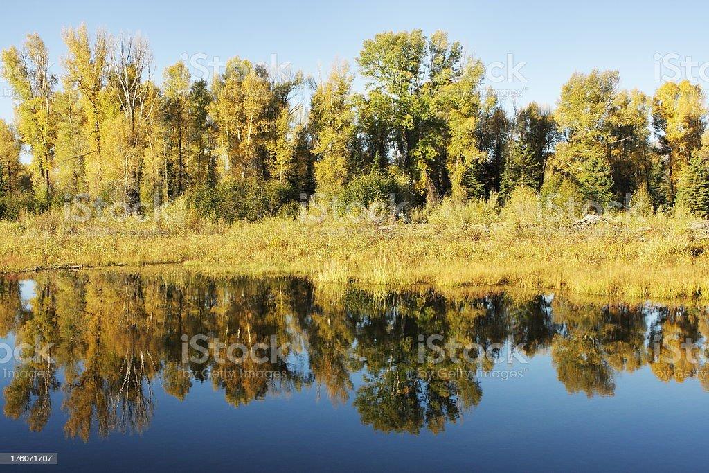 Snake River Sunrise Tree Reflection royalty-free stock photo