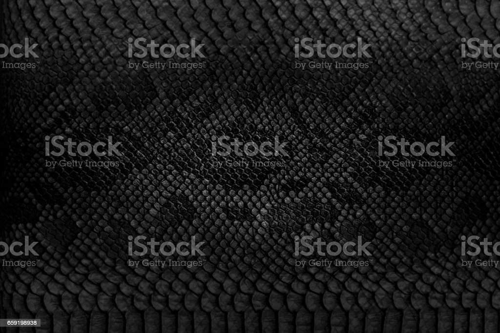Snake skin background. stock photo