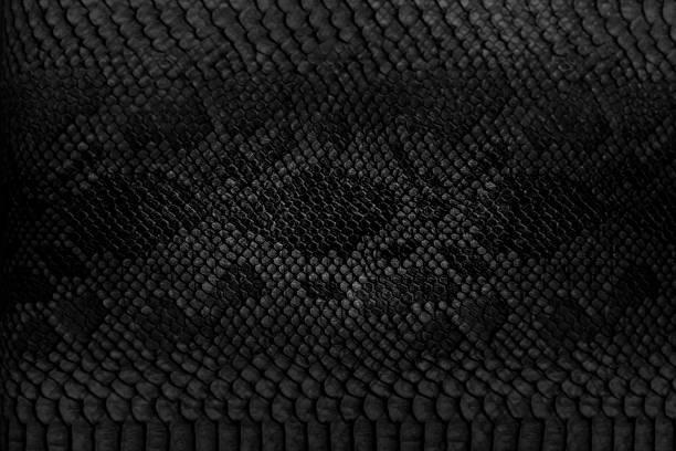 蛇皮の背景です。 - ヘビ ストックフォトと画像