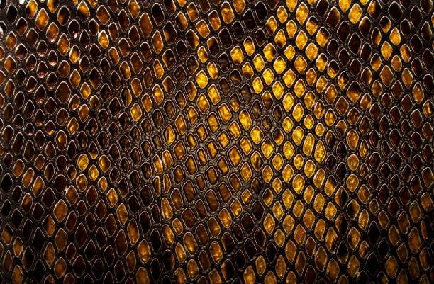 fondo de la piel de serpiente - serpiente fotografías e imágenes de stock