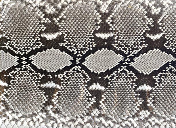 Snake skin black and white pattern picture id115988363?b=1&k=6&m=115988363&s=612x612&w=0&h=csix7sfxqofdbom8956kzpqegx7ruaxqqwl3k45nkcu=