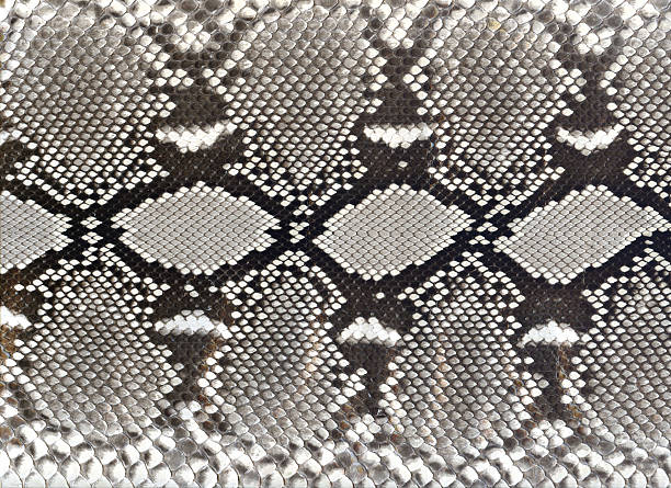 snake skin schwarz und weiß-muster - schwarze schlange stock-fotos und bilder