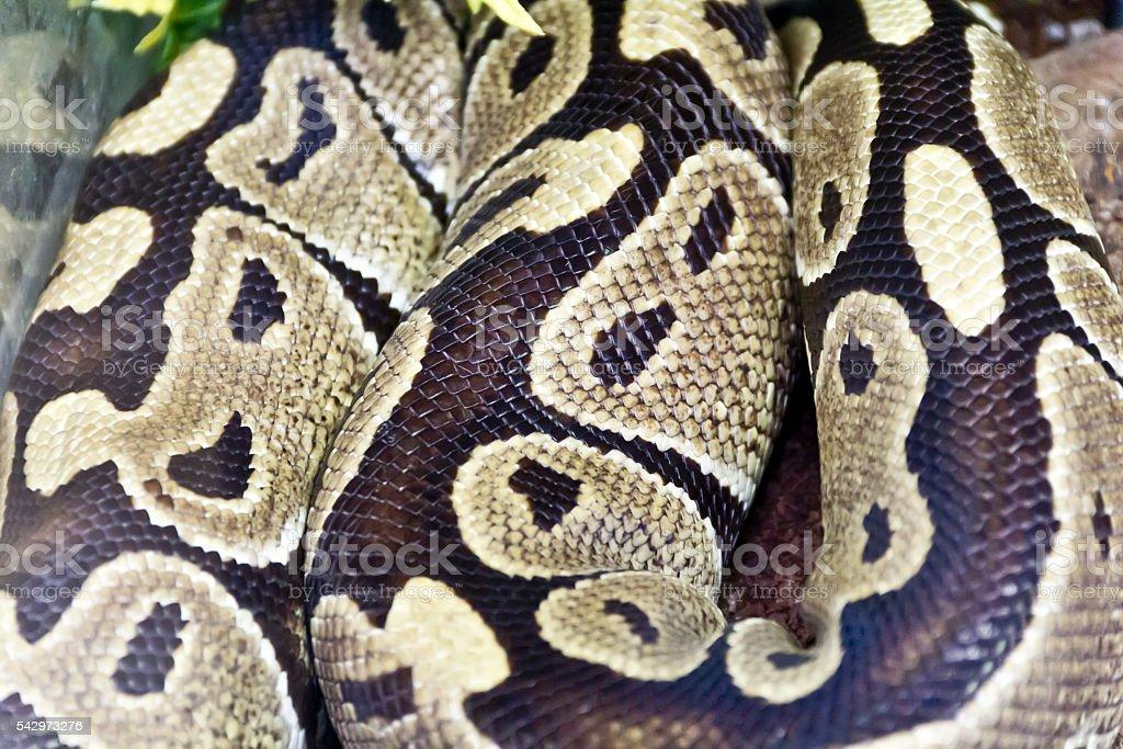 Snake skin close up in zoo – zdjęcie