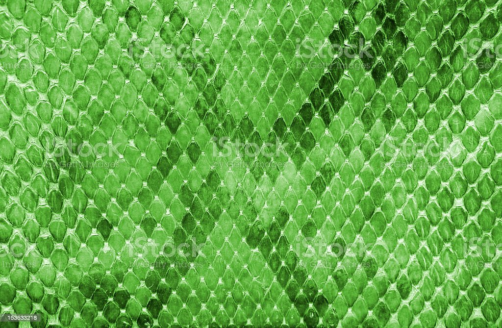 Snake skin green color stock photo