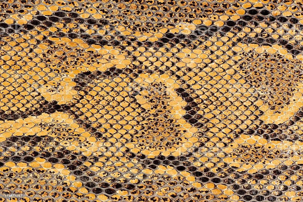 Snake Skin Macro stock photo