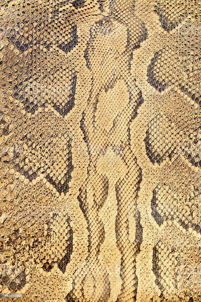 Snake Skin royalty-free stock photo