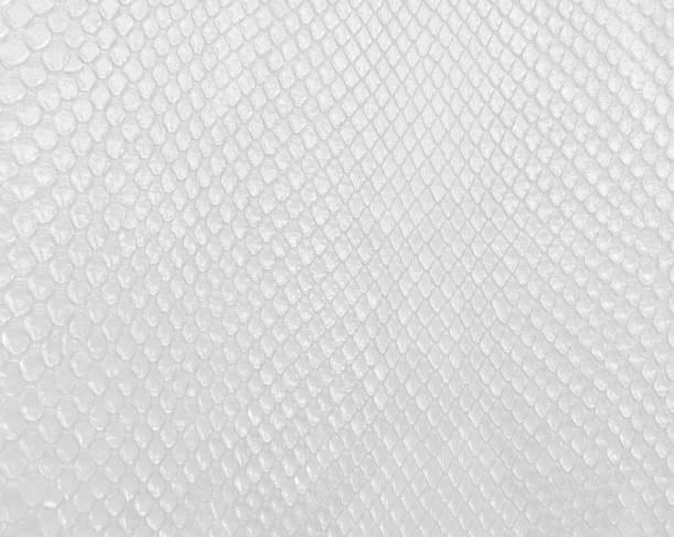 Snake skin texture in white color, modern bright white background. - foto stock