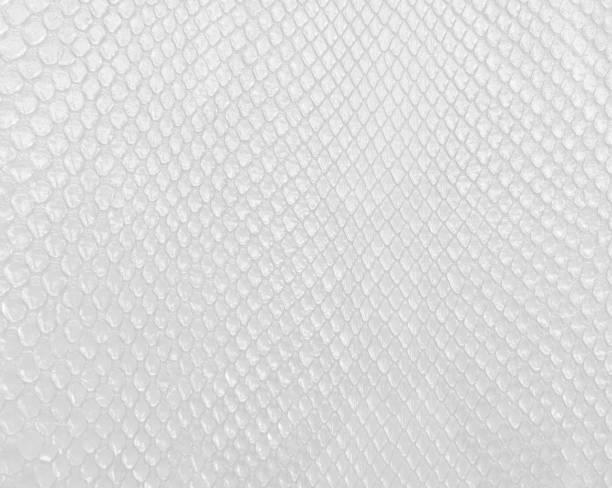 Textura en color blanco, moderno brillante fondo blanco de piel de serpiente. - foto de stock