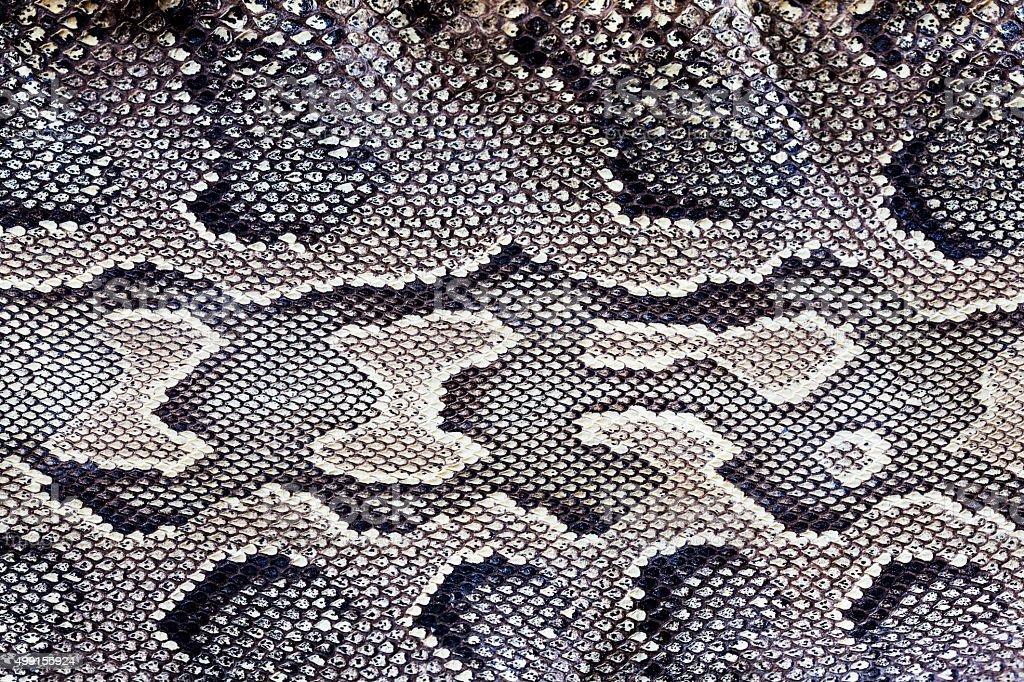 Snake texture stock photo