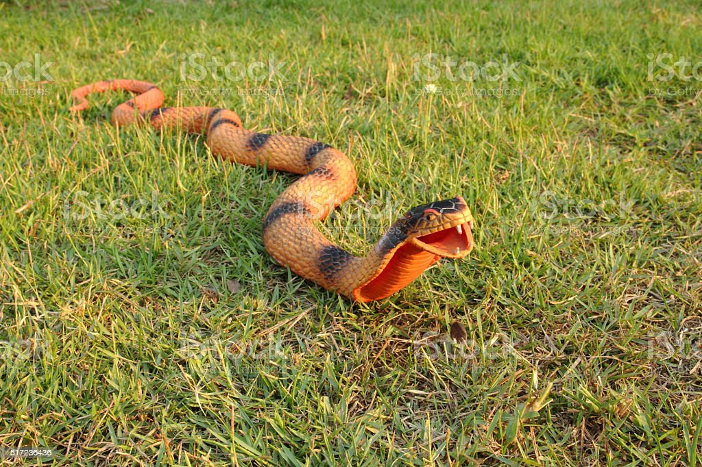 Snake toy stock photo
