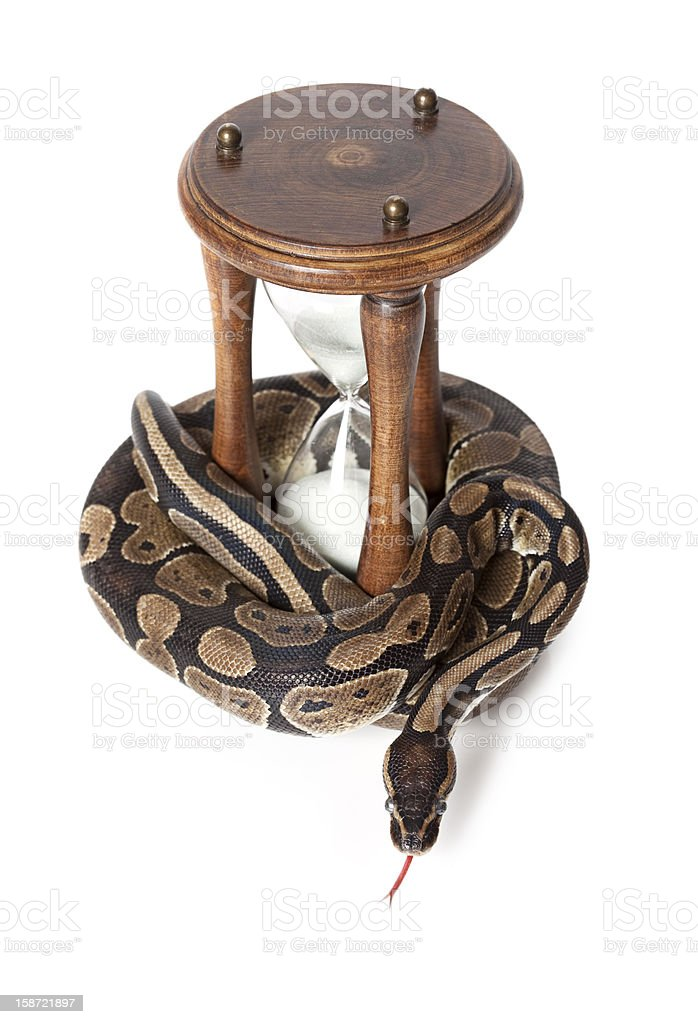 Snake with hourglass royalty-free stock photo