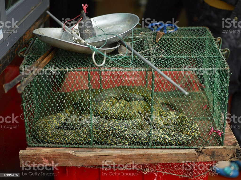 Snakes at a restaurant royalty-free stock photo