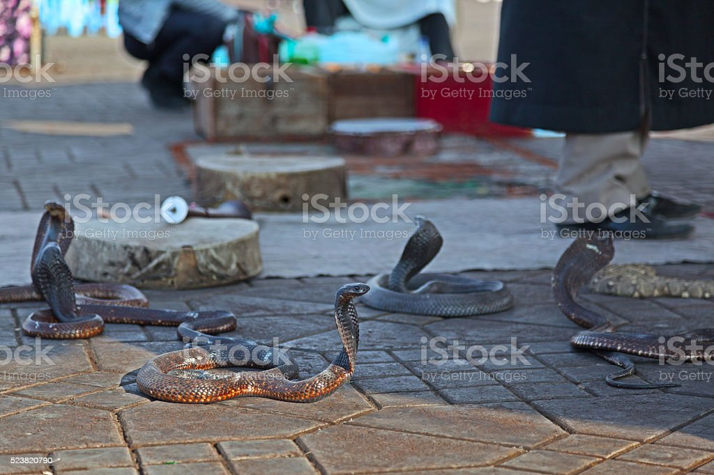 Snakes at Jemaa El-Fna square in Marrakech. Morocco. stock photo