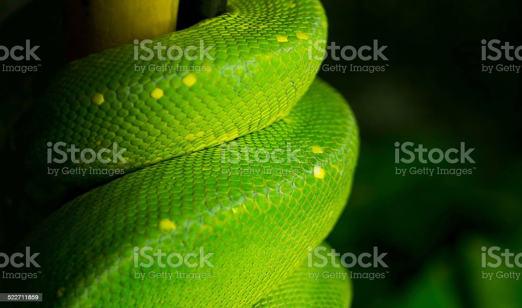 Snake's body stock photo
