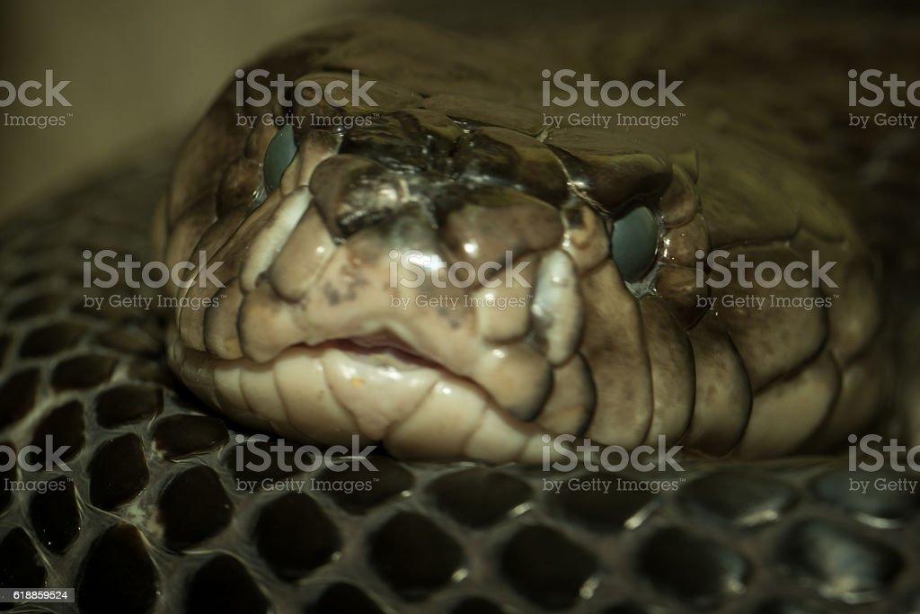 Snake's head stock photo