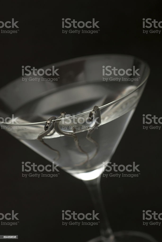 Snakes in cocktail glass without olive royalty-free stock photo