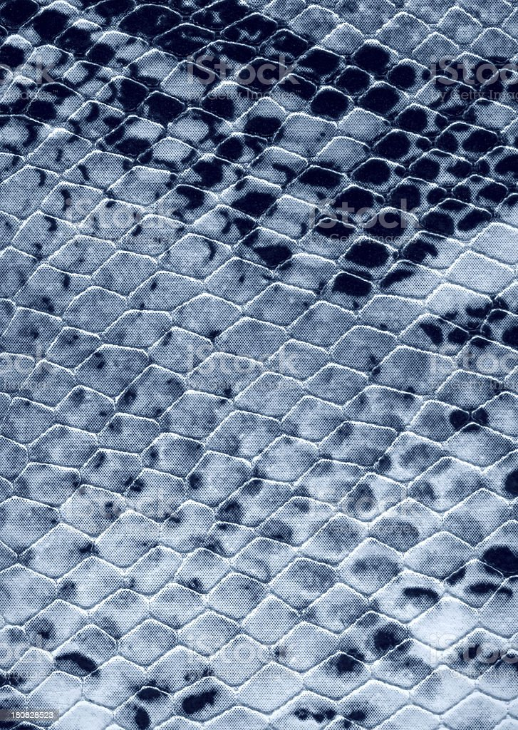 Snakeskin Macro stock photo