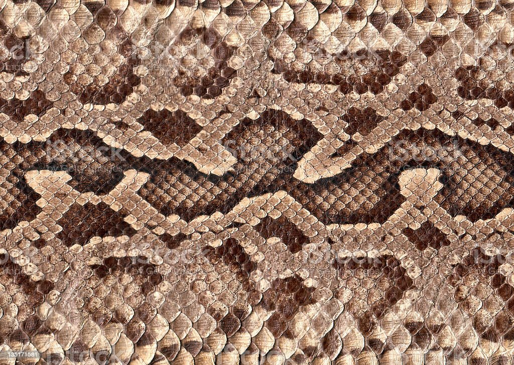 Snakeskin royalty-free stock photo