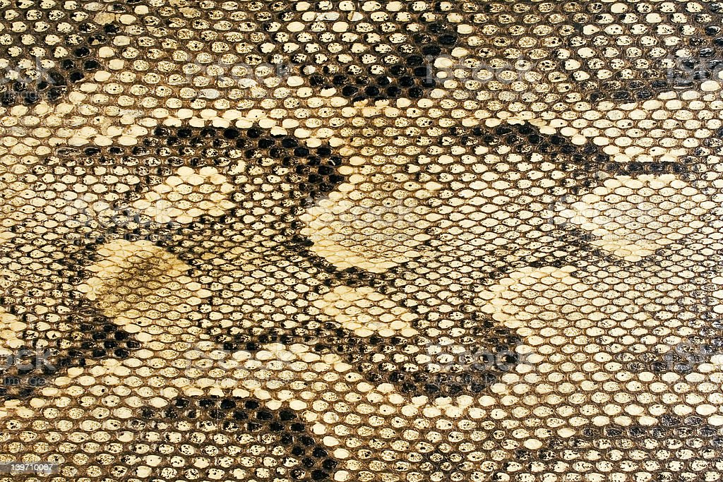 Snakeskin-Texture stock photo