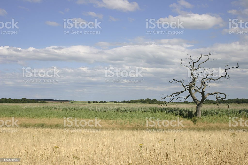 Snape skeleton tree royalty-free stock photo