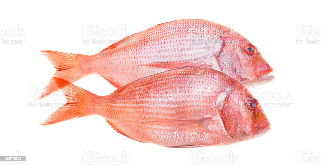 Snapper Fish Isolated stock photo