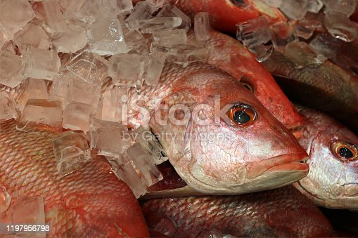 A red snapper fish displayed at market place