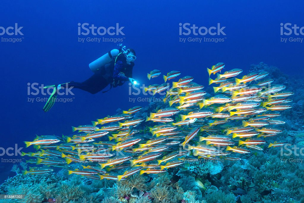 Snappers and diver - Palau, Micronesia stock photo