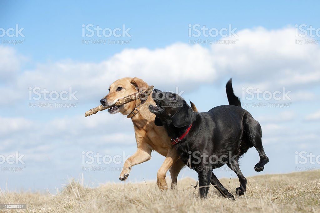 snatch and grab royalty-free stock photo