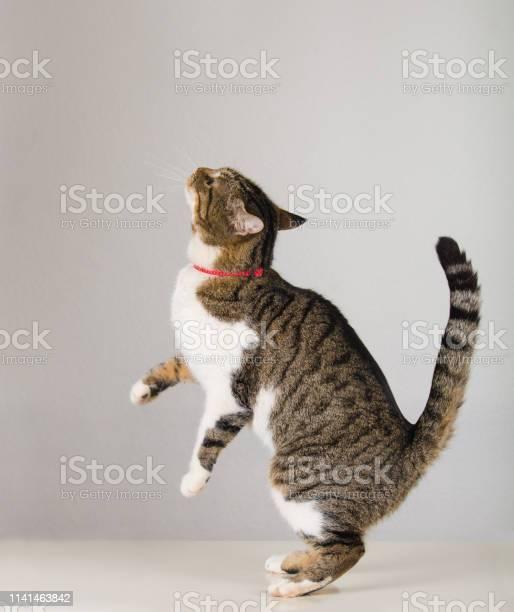 Sneaky cat picture id1141463842?b=1&k=6&m=1141463842&s=612x612&h=x yhozlkzdrxb9gxkit0cdern91qvfsn2h1rj4adasy=