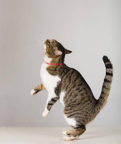 Sneaky cat picture id1141463842?b=1&k=6&m=1141463842&s=612x612&w=0&h= x5u2emqfkd82fil7sxdy5glhsubtupqvc46d1mvops=