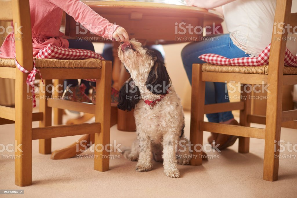 sneaky dog meal stock photo