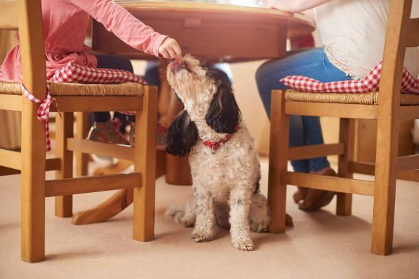repas de chien sournois - Photo