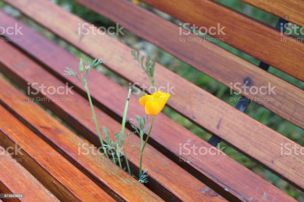 Fleur sournois - Photo