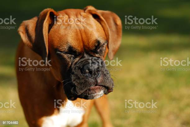 Sneezing puppy picture id91704460?b=1&k=6&m=91704460&s=612x612&h=eojh2kjww5uo8o jkvvyrimsf2npcfuuh6sth4ijivo=