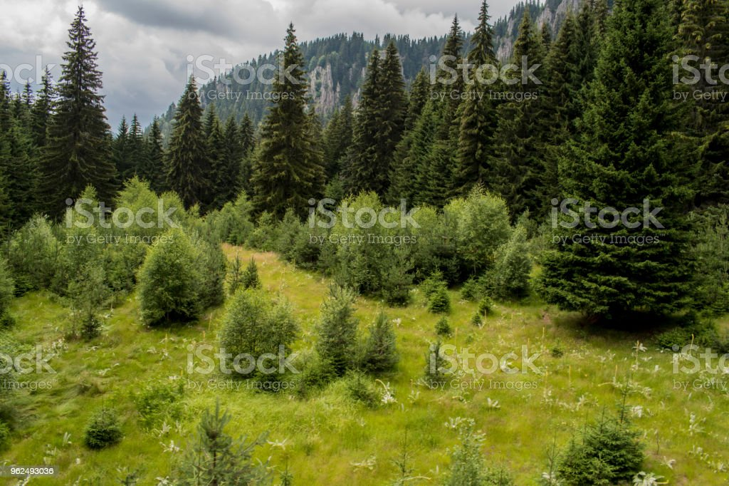 Snezhanka is a peak in the Rhodopes, Bulgaria. It is located 15 km away from the town of Smolyan. - Royalty-free Blue Stock Photo